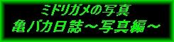 亀バカ日誌~写真編(ミドリガメの写真)~ならニプロhp